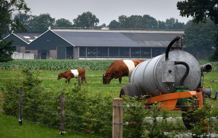 Een intensieve veehouderij in de Gelderse Vallei.  Beeld Marcel van den Bergh / de Volkskrant