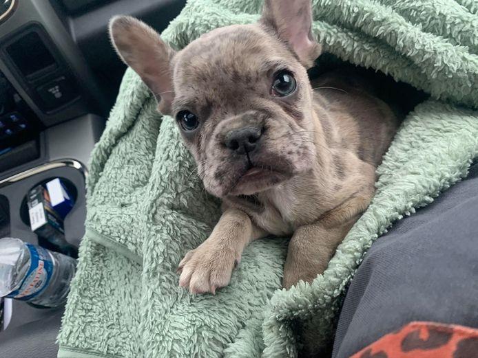 Pup Nellie van Dyonne Hanbeukers.