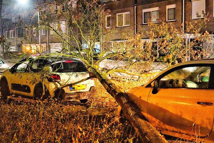 Boom omgewaaid op geparkeerde auto's in Rijen.