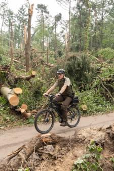 Gemeente stopt na valwind Leersum met weghalen boomstronken uit angst voor kabels en leidingen