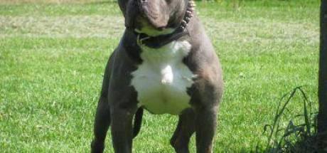 Udenaar die hond ophitste tegen politie hoeft hem van rechter niet te muilkorven