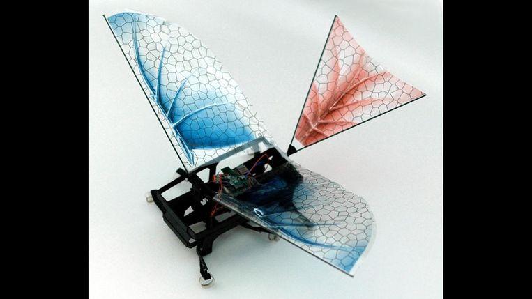 DASH+Wings, de robot die wetenschappers inzicht verschaft in het ontstaan van vliegende dinosaurussen. Beeld Kevin Peterson/Universiteit van Californië, Berkeley.