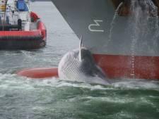 Schip sleept walvis mee Rotterdamse haven in