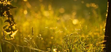Warmte zorgt voor pollenexplosie en piek van hooikoortsklachten