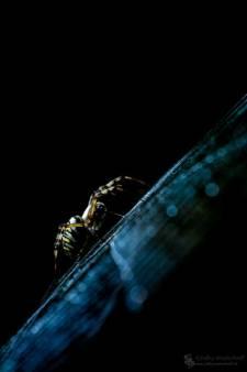 Dit zijn volgens fotografe Marit van Ekelenburg de beste macrofoto's uit de vierde weekopdracht