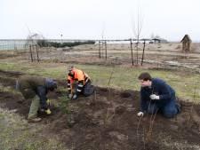Voedselbos van 4 hectare in Klein-Dongen: 'Wat we oogsten, gaat naar de winkel'