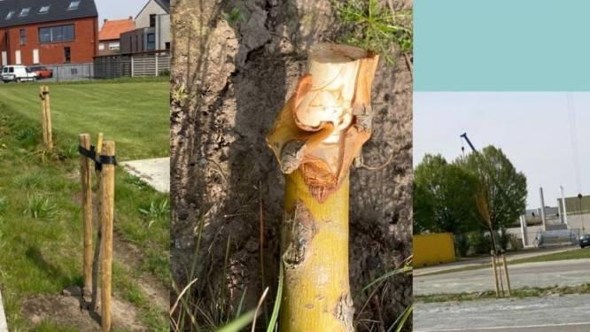 Zes jonge bomen op parking van FC Punt Larum afgeknakt: politie zoekt getuigen van vandalisme