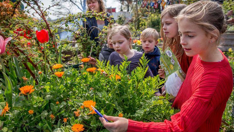 Kinderen tellen de bijen en vooral hommels Beeld Jean-Pierre Jans