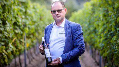 """Oostkampse wijnbouwer plant 12.000 druivenstokken aan op terrein bij Damse Vaart: """"Binnen 4 jaar moet dit een lekkere schuimwijn opleveren"""""""