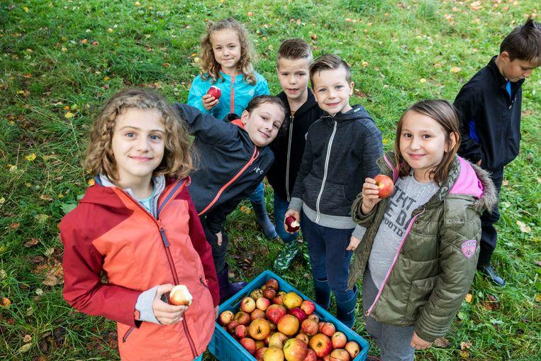 Kinderen gaan appels die uit de hoogstambomen met oude fruitrassen gevallen zijn oprapen en er sap van maken.