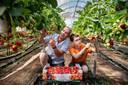 Edward Bastiaansen en zoon Thijs telen hun aardbeien milieubewust. ,,Niet overdreven veel water geven, zodat de vruchten niet opzwellen.''