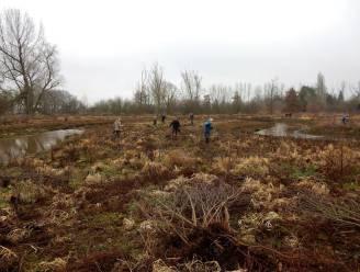 Natuurpunt plant 1.500 bomen in Malesbroek