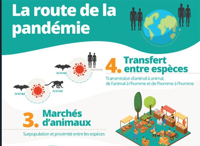 """""""La déforestation et destruction d'espèces met l'homme en contact avec des animaux qui peuvent lui transmettre des virus"""", expose WWF."""