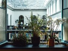 """UGent opent plantenhotel om planten van studenten op te vangen in vakantie: """"Volledig gratis, we vragen enkel een glimlach"""""""