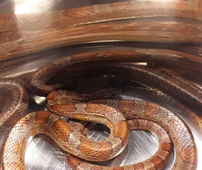 Slang in de pan, gevangen door politie Gouda, meegenomen door dierenambulance.