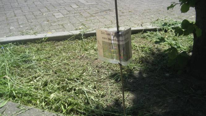 Iets te overijverige groenarbeiders kortwieken bloemenperkjes