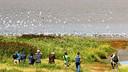 Vogelaars aan de kust bij de Zwarte Haan met meeuwen, ganzen en andere vogels.