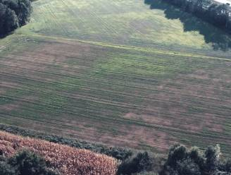 Twee vliegen in één klap met ChariTree: drie goede doelen steunen én een nieuw bos van 1,6 hectare aan Ecoduct De Munt