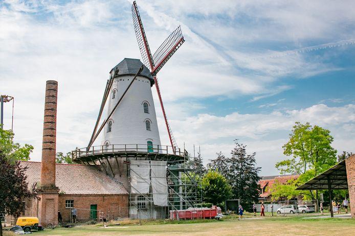 De Roomanmolen in Sint-Pauwels: sinds 1847 in rode bakstenen, maar voortaan gaat die als een witte molen door het leven.