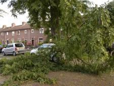 Nieuwe bomen voor Van Duyn van Maasdamstraat in de Heuvel: 'Al drie keer viel er een grote tak naar beneden waarbij auto's beschadigd werden'