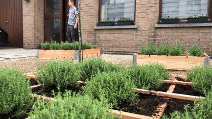 Frances Lefebure en het team van Make Belgium Great Again planten lavendel voor de bijtjes