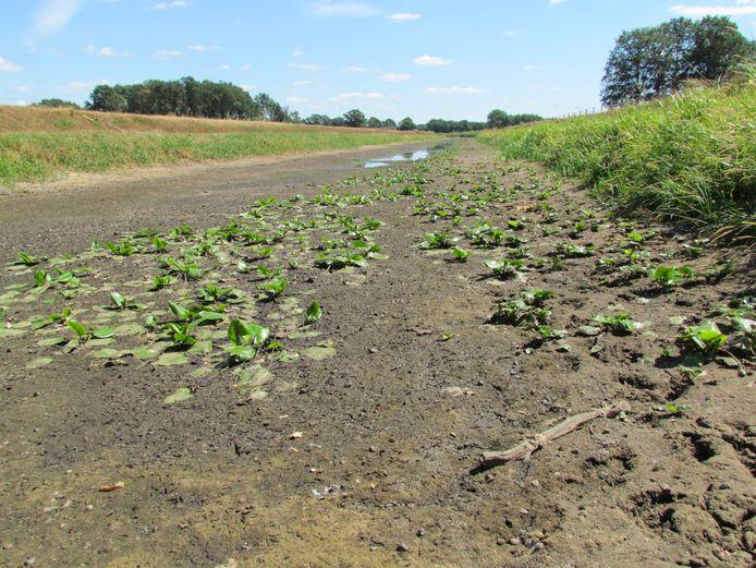 Droogvallende Schipbeek bij Gelselaar in de droge zomer van 2018. In 2010 overstroomde de Schipbeek juist. Het waterschap wil deze weerextremen kunnen opvangen