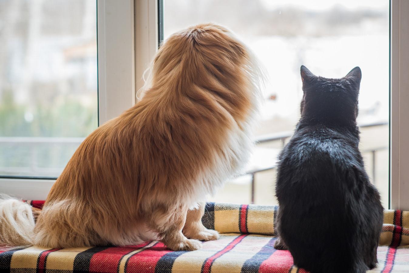Een hond en een kat kijken uit naar de komst van hun baasje.