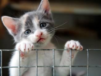 Ruim een derde minder dieren in beslag genomen vorig jaar
