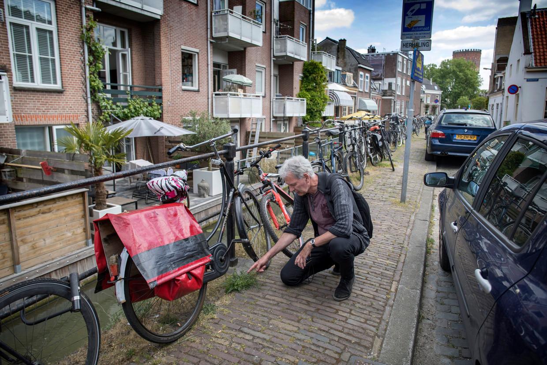 Ton Denters op zoek naar Stadsflora in Utrecht.