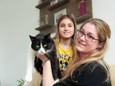 Dierenbeul beschiet kat Ollie met luchtbuks: 'De kogel had ook een kind kunnen raken'