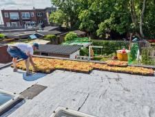 Amersfoorters staan massaal vroeg op om subsidie voor groen dak aan te vragen: subsidieloket loopt vast