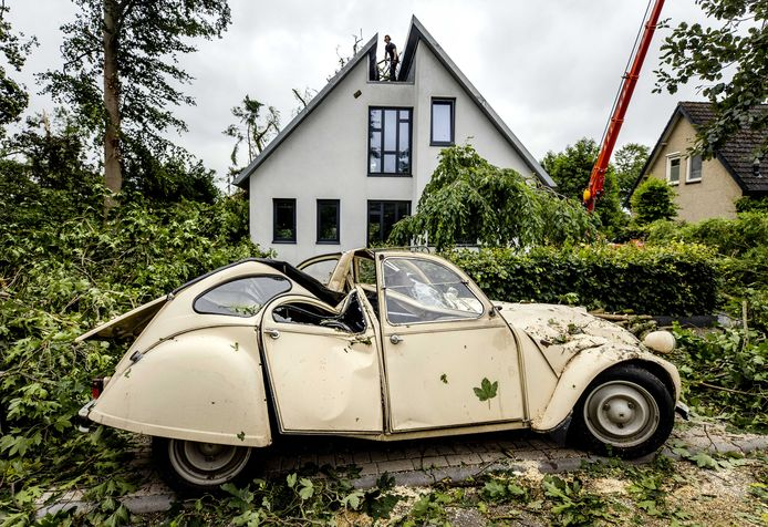 De eend die zwaar beschadigd raakte door een omgevallen boom, een dag na de hevige storm.