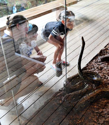 Reptielenhuis De Aarde krijgt voorzichtig weer hoop, maar nog steeds is iedere euro welkom