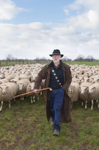 """""""Wolf tilde schaap van 60 kilo gewoon van de grond"""": herder ziet hoe zijn kudde aangevallen wordt"""