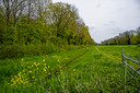 Bewoners van de Oosthavendijk in Middelharnis zijn niet blij met de plannen voor nieuwe randweg, deze groenstrook zou dan verdwijnen.