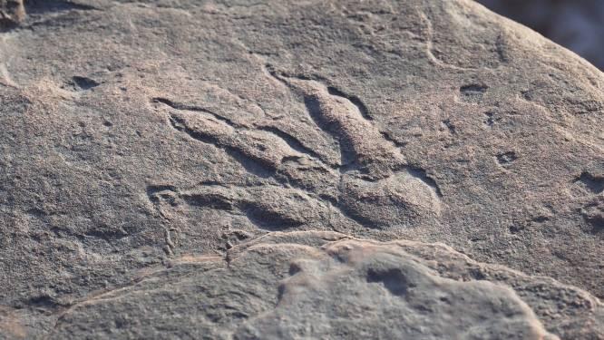 Vierjarig meisje ontdekt voetafdruk van dinosaurus tijdens strandwandeling in Wales
