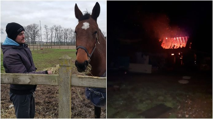 Jeffrey Desmet (26) uit Zarren met zijn Belgische warmbloed Luna. Hij kon het zwangere paard, samen met Daisy en Passi-Belle, redden uit de brandende stal.