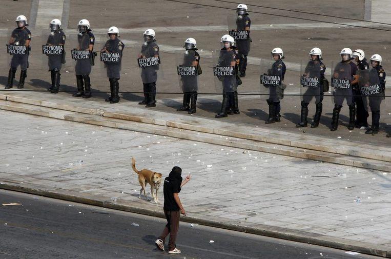 Loukanikos op dezelfde dag. Overigens noemen sommige inwoners van Athene de hond Kanellos. Bij de gemeente staat hij bekend als hond nummer 1842. © Reuters<br /> Beeld