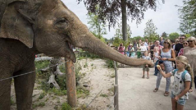 Babyolifantje gestorven in Pairi Daiza