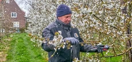 Lente? Het lijkt wel winter! Fruittelers van blote bast naar vier truien en een muts op: 'Het is veel te koud'