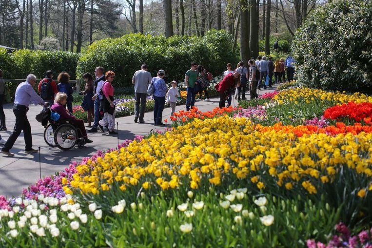 In de Keukenhof, een park bij Lisse in Zuid-Holland, zorgen ruim zeven miljoen tulpen, narcissen en hyacinten voor 32 hectare aan geur en kleur.