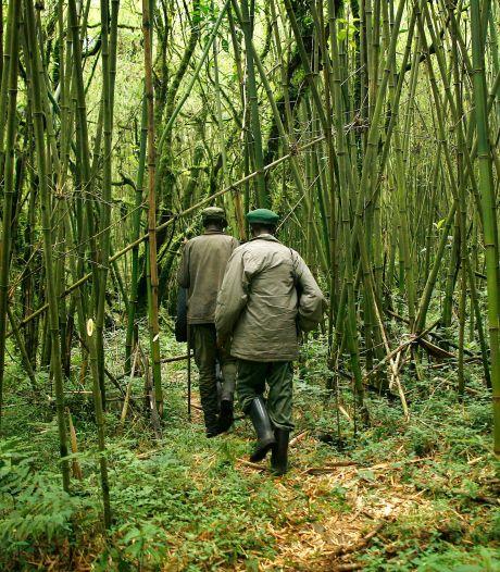 Six gardes tués et un autre blessé lors d'une attaque dans le parc des Virunga