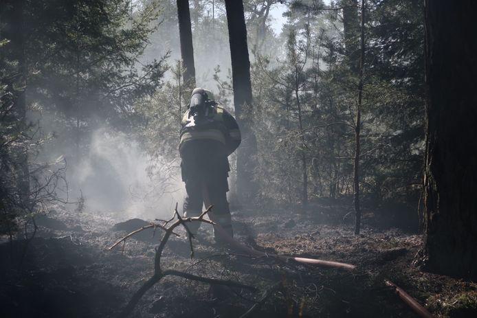 Brand in bosgebied Het Zand in Alphen.