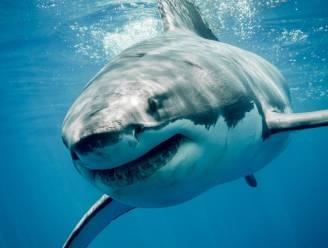 Haaien waren 19 miljoen jaar geleden bijna uitgestorven, en daar zijn ze nooit van bekomen