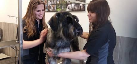 Wassen, knippen en föhnen in All Dog Trimshop in Liempde