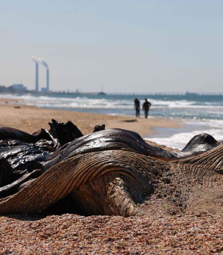 Israël sluit alle stranden na 'enorme ecologische ramp'