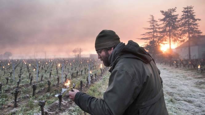 """Ook Vlaamse wijnbouwers vechten tegen de vorst in Frankrijk: """"Het lijkt romantisch, maar het kan snel keren"""""""