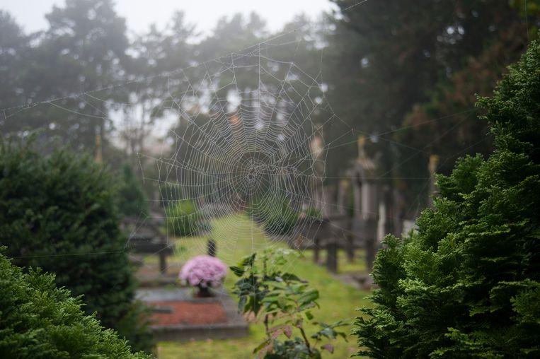 Natuur ontdekken op het kerkhof van Wetteren.