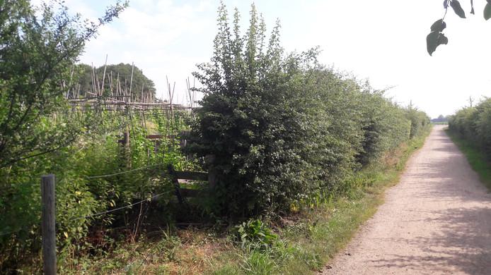 De volkstuintjes liggen aan de zuidelijke voet van de Zuidereng en zijn afgezoomd met meidoornhagen.