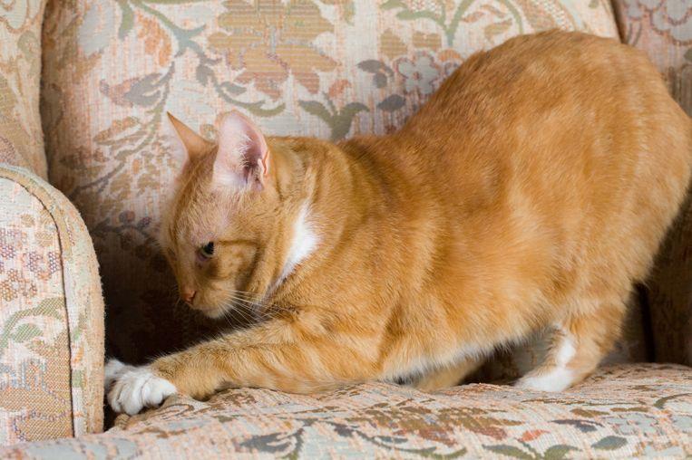 Dit is waarom katten aan je meubels krabben